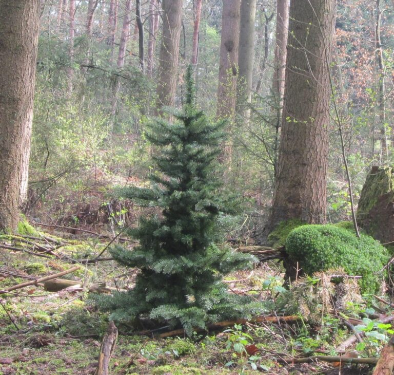 Basic Tree Refreshing Green 240cm-1941